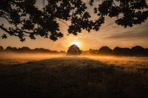 simon-wilkes-Sunrise with Trees